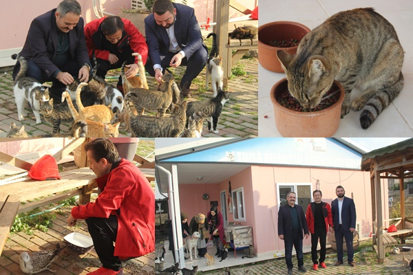 Başkanlardan Kedi Evi'ne Ziyaret