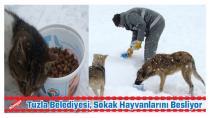 Tuzla Belediyesi, Sokak Hayvanlarını Beslemek İçin Ekip Sayısını Arttırdı