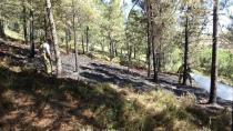 Aydınlı'da Ormanlık Alanda Yangın Çıktı