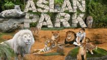 Önlem Almayan Aslanları Göremeyecek