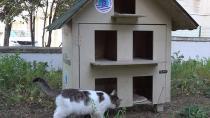 Tuzla'da Sokağa Atılan Yavru Kediler Sıcak Yuvalarına Kavuştu